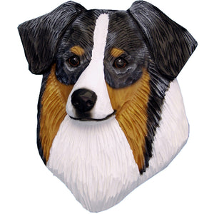 Australian Shepherd Small Head Study