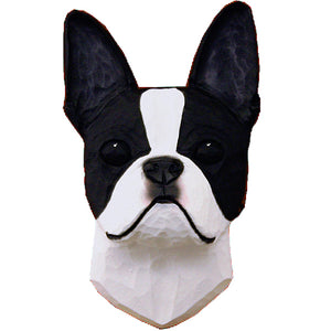 Boston Terrier Small Head Study