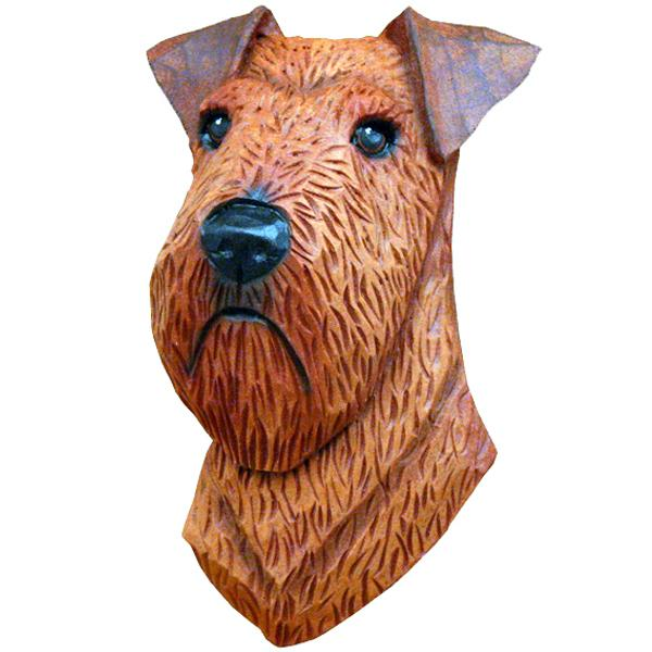 Irish Terrier Small Head Study