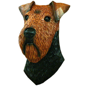 Welsh Terrier Small Head Study