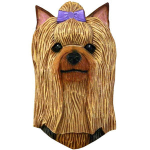 Yorkshire Terrier Small Head Study