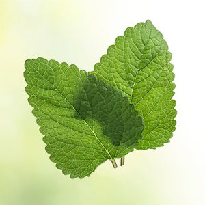 Anxiety And The Natural Power Of Plants: Lemon Balm