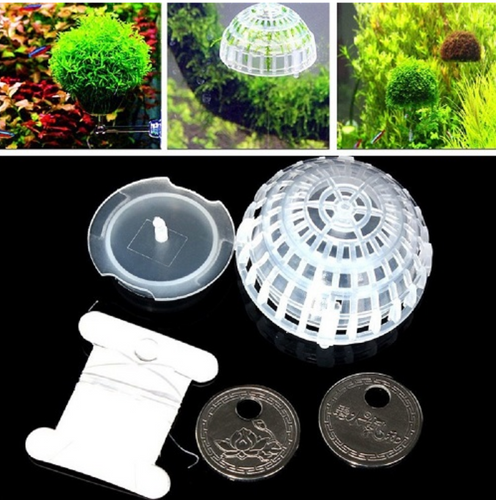 Moss Ball Plastic Holder - Seven Fishes