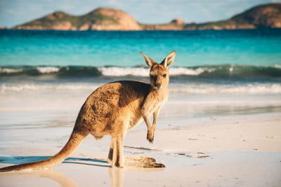 OUR AUSSIE BUCKET LIST