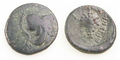 338-300 BC Lokris Opuntia AE14 Greek Coin Athena Grape Cluster SngCOP-68