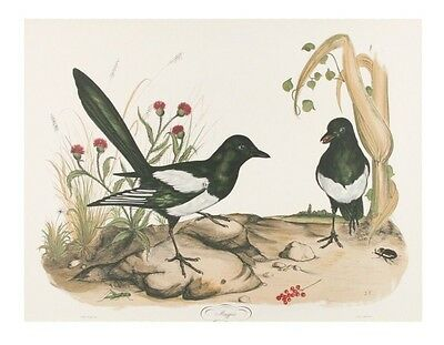 """Magpie"" by Jerome Trolliet Lithograph on Paper Penn Prints 1973 20"" x 26"""