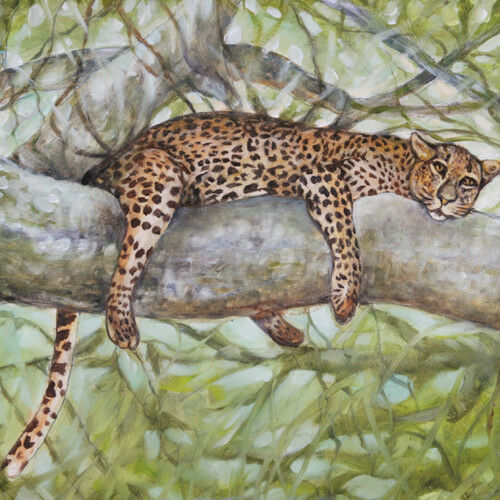 """Nap Time"" (Cheetah Resting in Tree) By Anthony Sidoni Oil Painting 14""x17"""