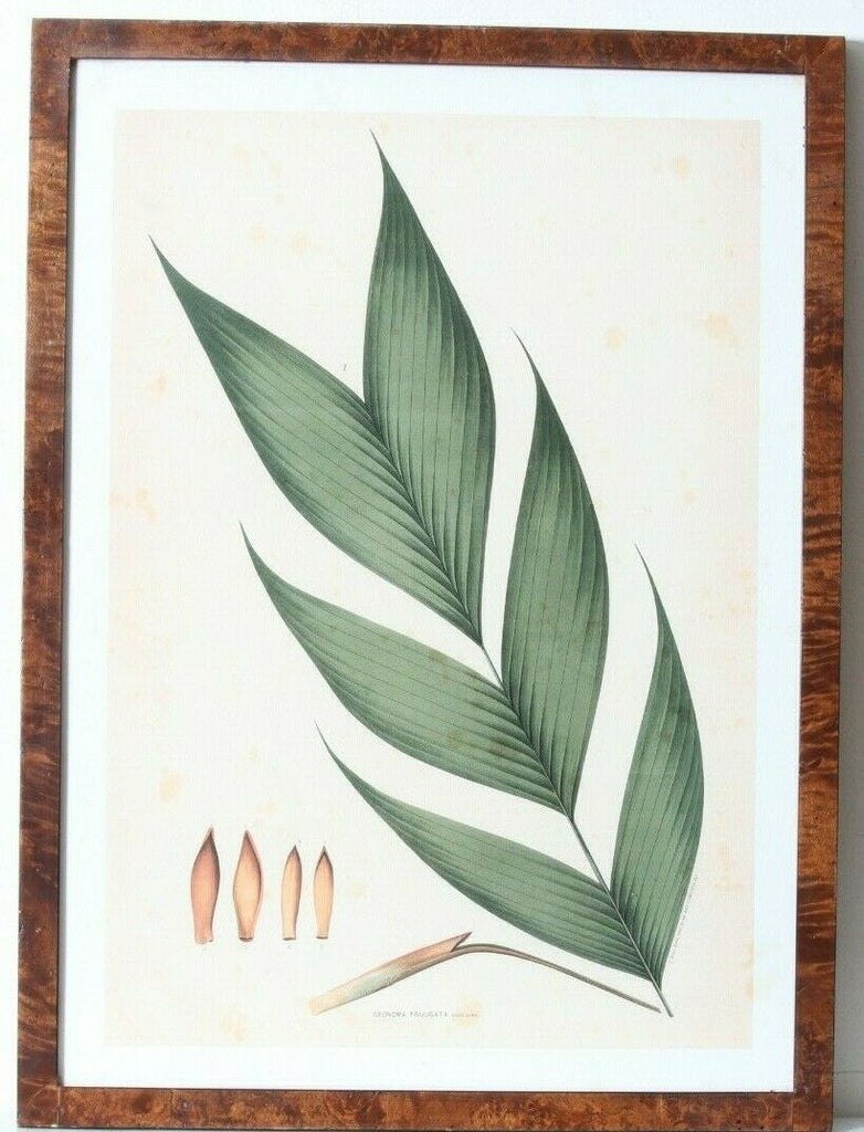 Joao Barbosa Rodrigues Lot of 4 Palm Tree Field Drawings Framed Original