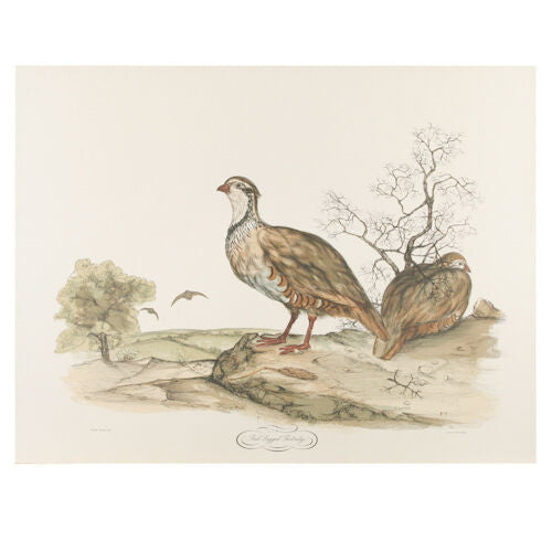 """Red Legged Partridge"" by Jerome Trolliet Litho on Paper Penn Prints 19 1/2""x26"""