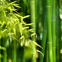 Bamboo & Grasses