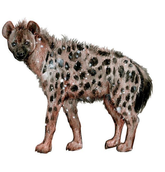 Hyena Wall Sticker