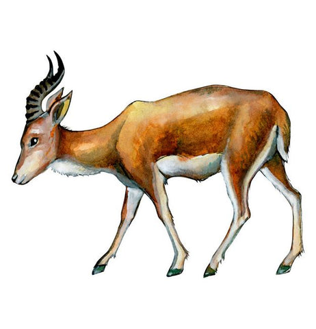 Antelope Wall Sticker