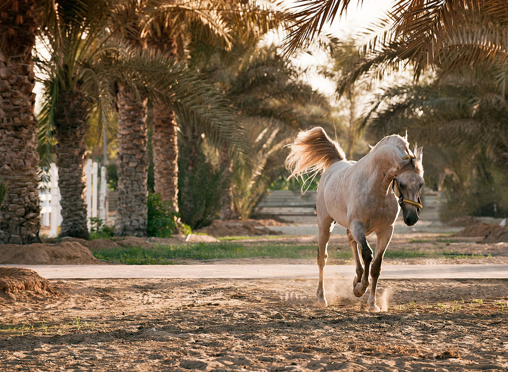 Arabian In The Palms
