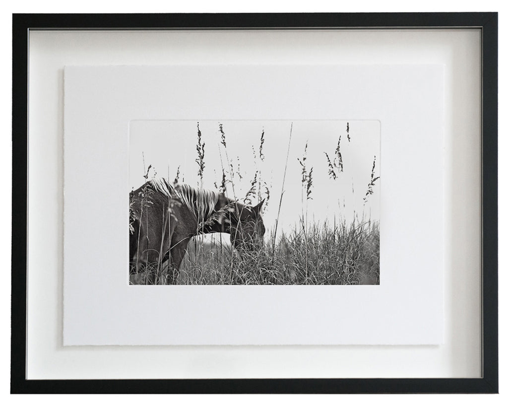 Banker Horse :: Photogravure Etching