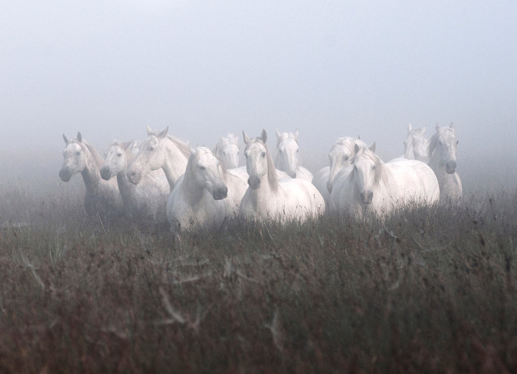 Camargue in the Mist :: Fine Art Print