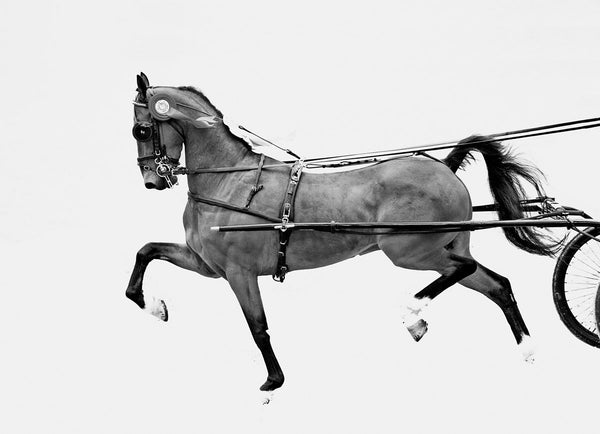 Hackney Harness