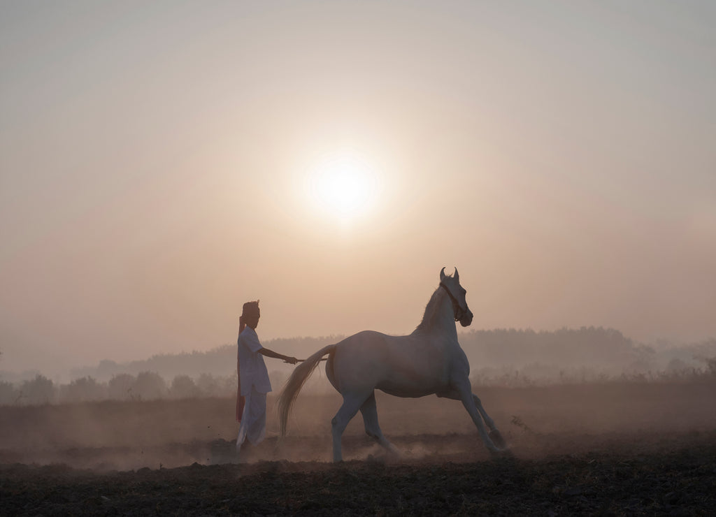 Marwari at Dawn :: Fine Art Print