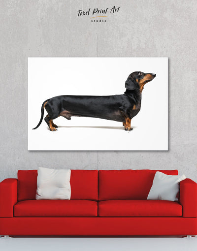 Dachshund Wall Art Canvas Print - 1 panel Animal Animals bedroom Contemporary