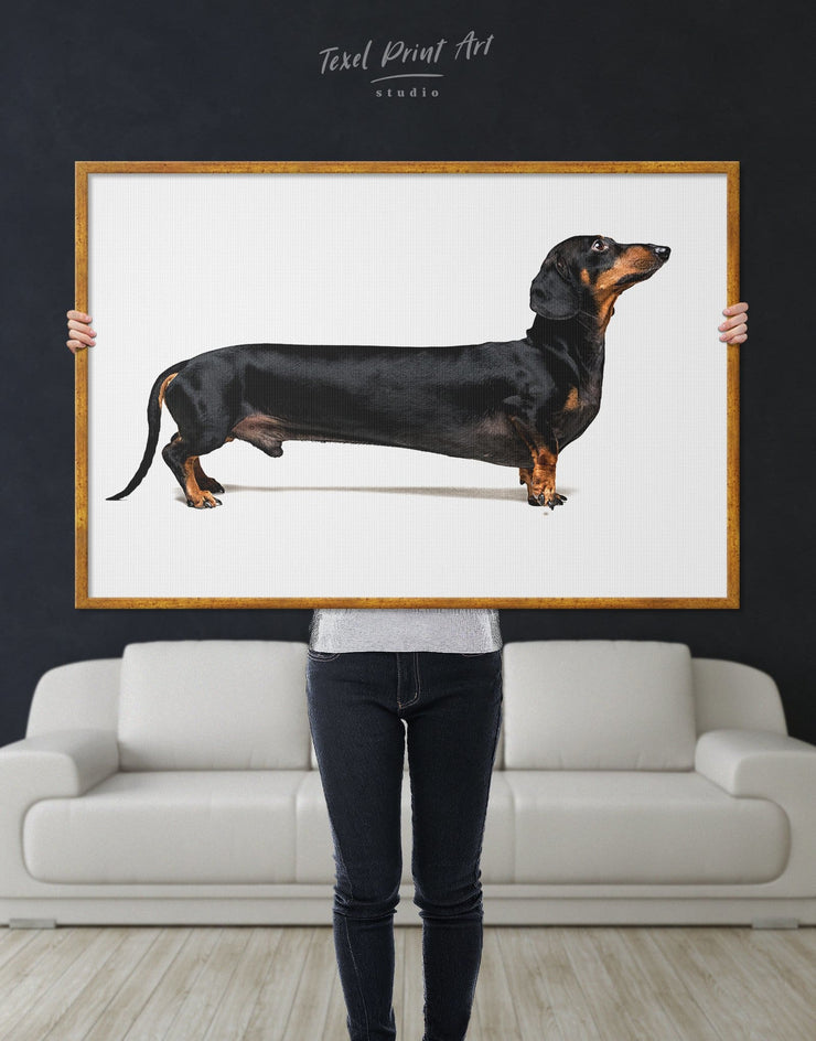 Framed Dachshund Wall Art Canvas - Animal Animals bedroom Contemporary Dachshund