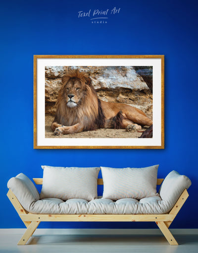 Framed Lion Wall Art Print - Animal Animals brown framed print lion wall art