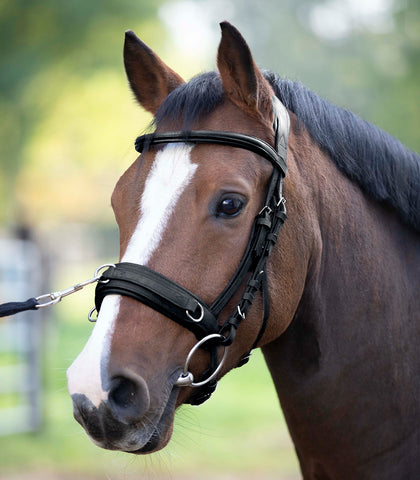 Waldhausen Anatomical Lunge Bridle