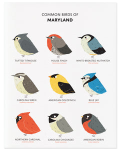 Nine Common Birds in the State of Maryland