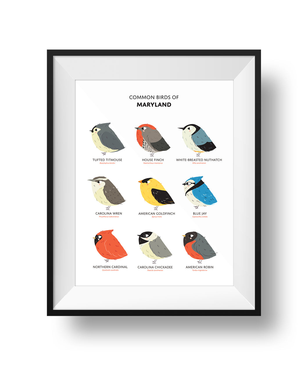Nine Common Birds in the State of Maryland in a frame