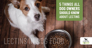 5 Things All Dog Owners Should Know About Lectins