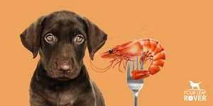 6 Ways Astaxanthin Keeps Your Dog Healthy