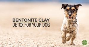 Feed Bentonite Clay To Detox Your Dog