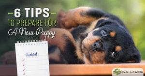 The Ultimate Checklist For Bringing Home A Puppy
