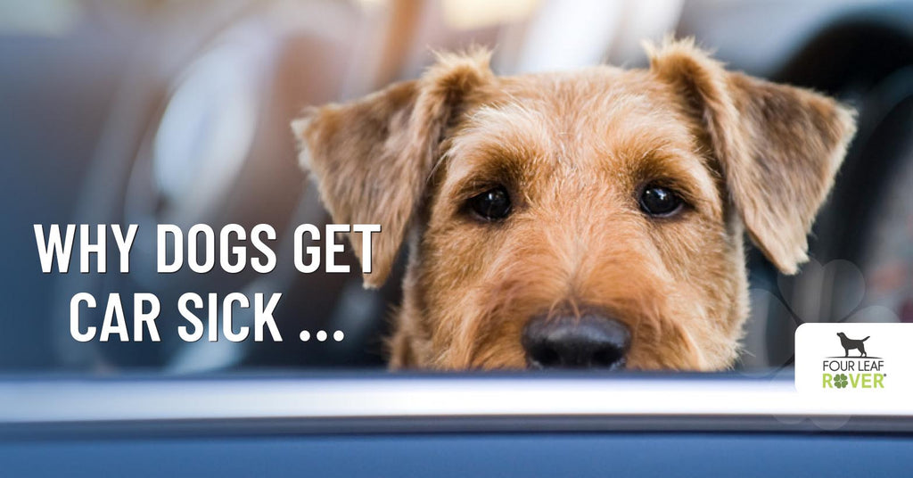 How To Stop Dog Car Sickness Naturally