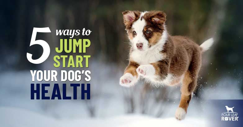 5 Ways To Improve Your Dog's Health
