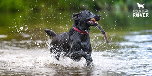 Arthritis In Dogs: Manage Pain Naturally