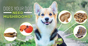 Mushrooms For Dogs: Does Your Dog Need Them?