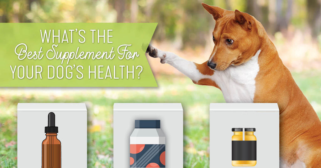 3 Natural Supplements For Dogs