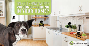 7 Common Dog Poisons In The Average Home
