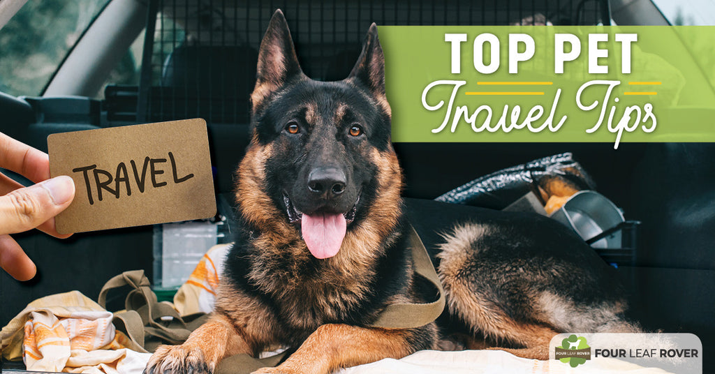 The Top 8 Pet Travel Tips For A Smooth Ride