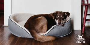 What Is Leaky Gut And How To Fix It In Dogs
