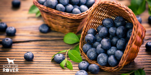 9 Reasons Your Dog Should Eat Blueberries