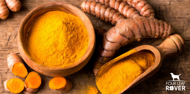 4 Ways Turmeric Can Help Your Dog Feel Better