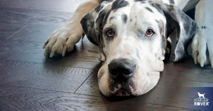 Why You Shouldn't Ignore Bloat In Dogs