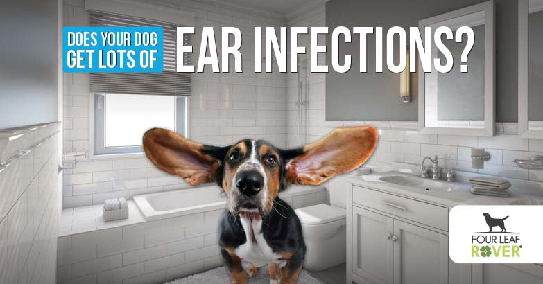 5 DIY Ear Solutions For Dog Ear Infections