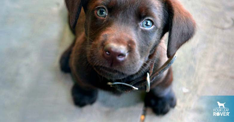 7 Tips For Potty Training Your Puppy