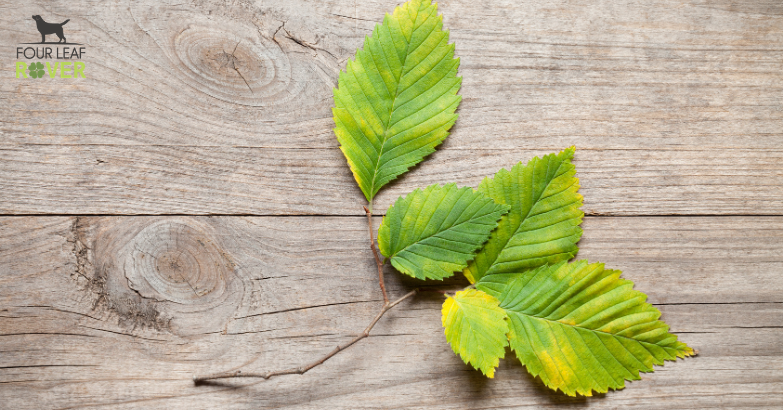 5 Ways Slippery Elm Can Help Your Dog Feel Better