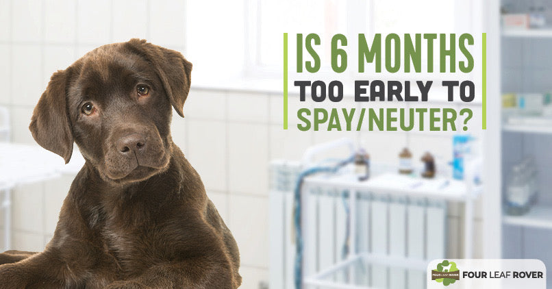 when should a dog be spayed