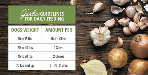 Garlic For Dogs Feeding Guidelines in a table form