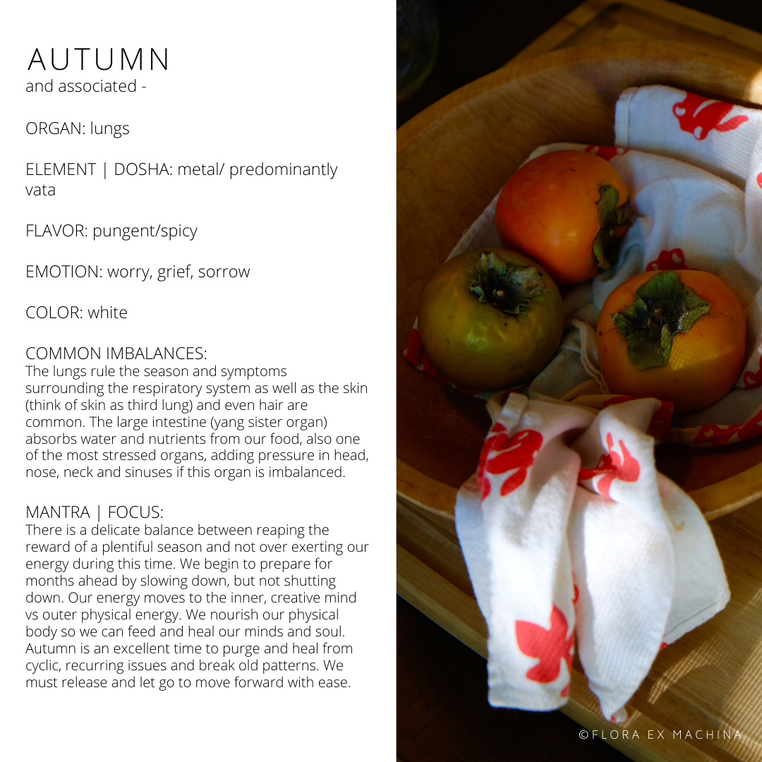 CLEANSING WITH THE SEASONS – AUTUMN E-BOOK