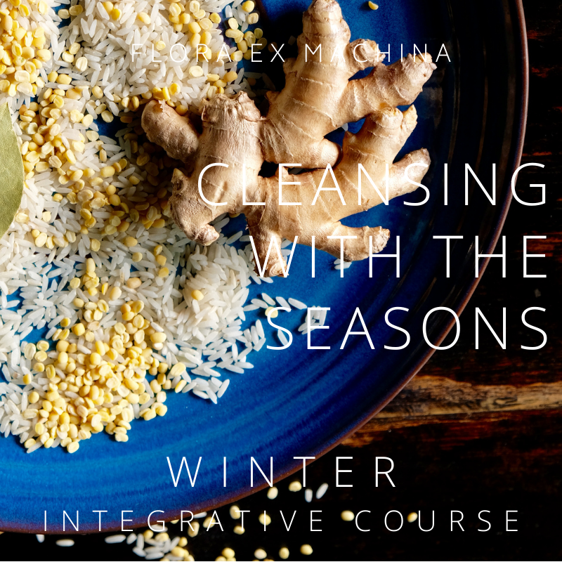CLEANSING WITH THE SEASONS – WINTER INTEGRATIVE E-COURSE