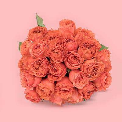 Coral Expression Rose